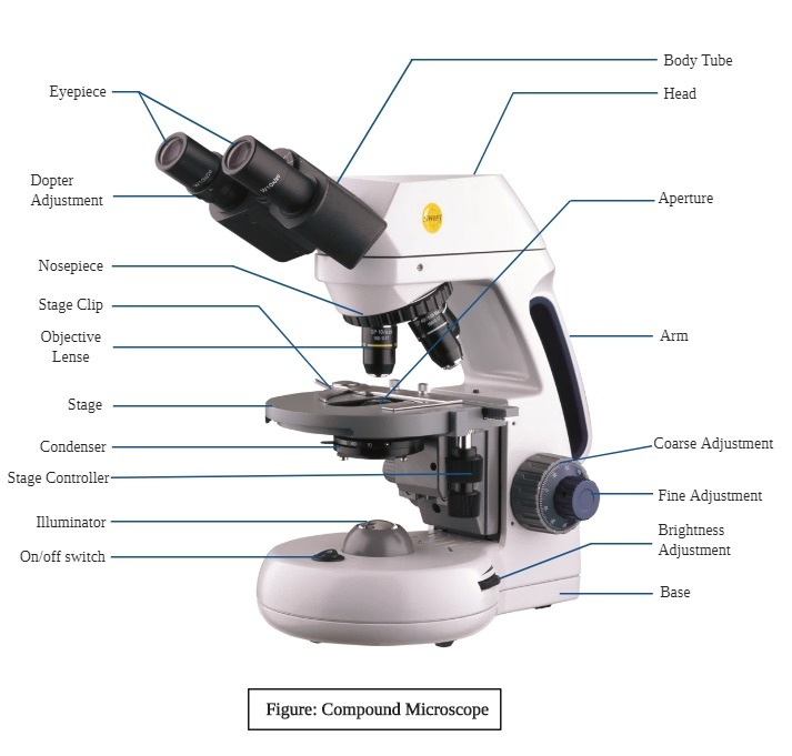 Parts of Compound Microscope