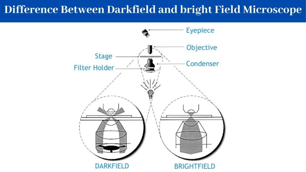 Difference Between Darkfield and bright Field Microscope
