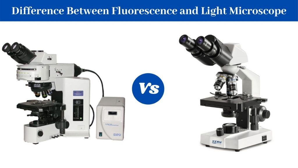 Difference Between Brightfield Microscope and Fluorescence Microscope