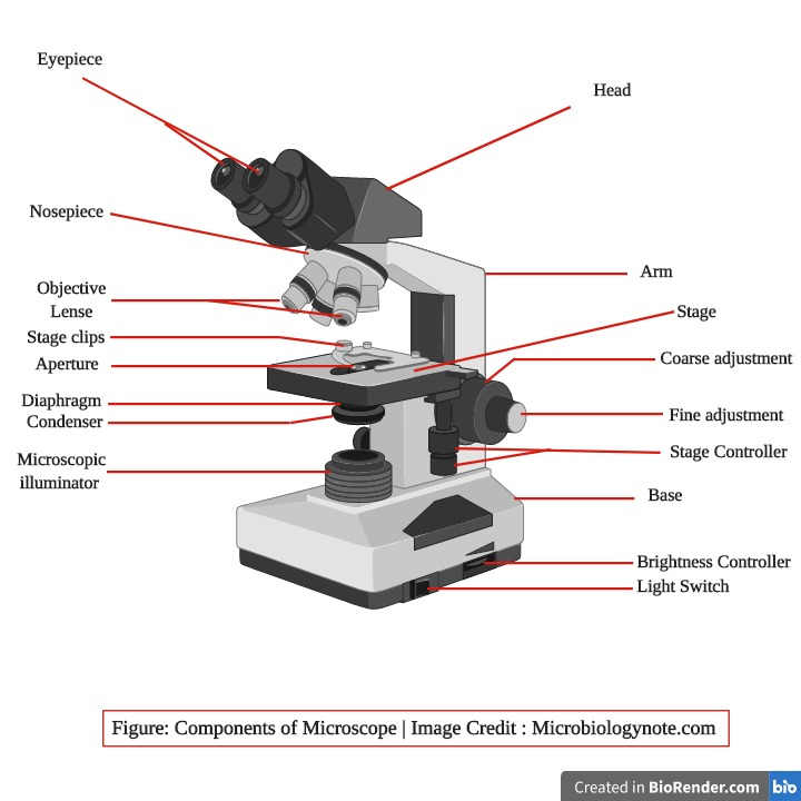 Parts of Microscope