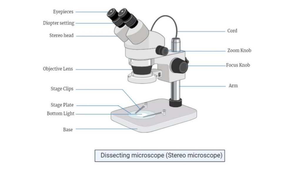Parts of Dissecting microscope