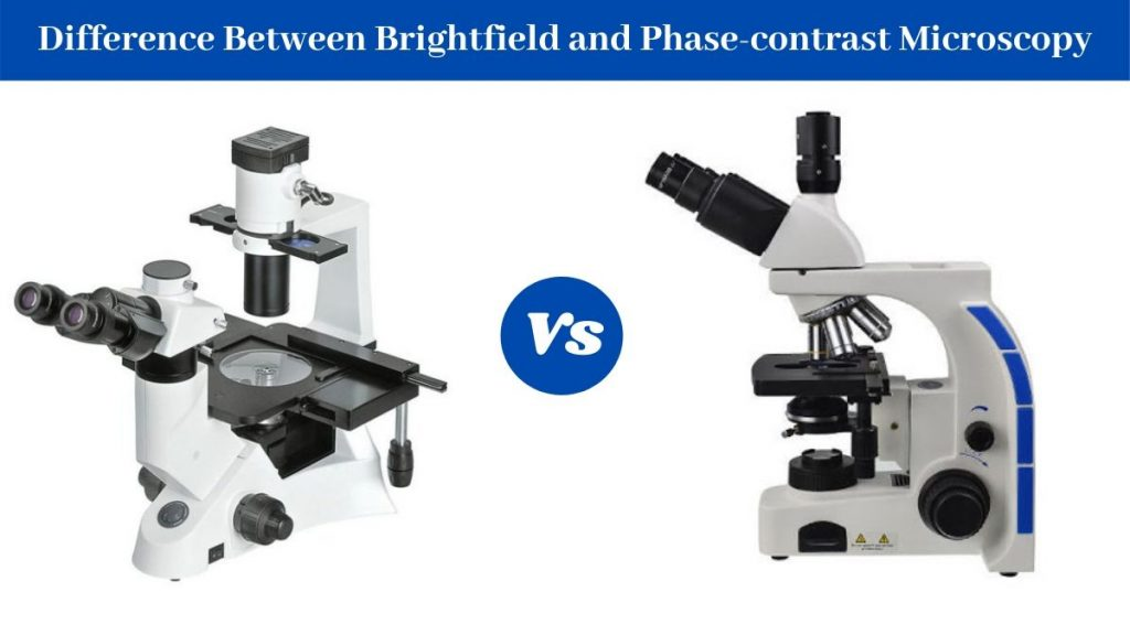 Difference Between Brightfield and Phase-contrast Microscope