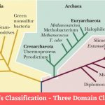 Carl Woese's Classification