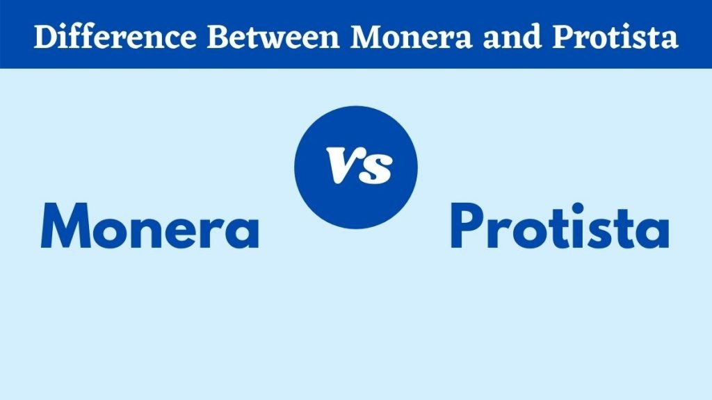 Difference Between Monera and Protista