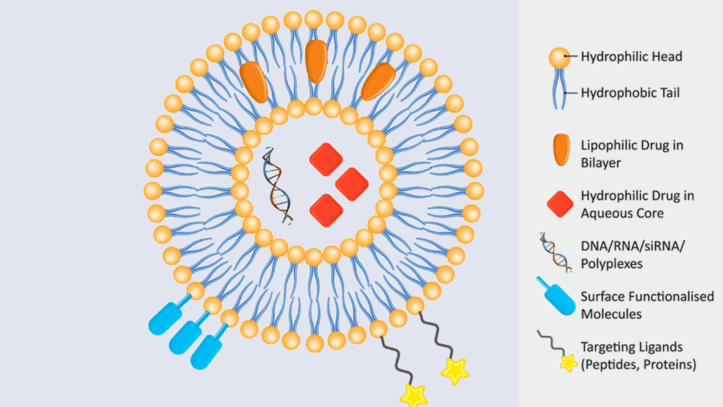 Cell Structure and functions - Vesicles
