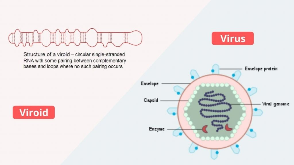Difference Between Virus and Viroids
