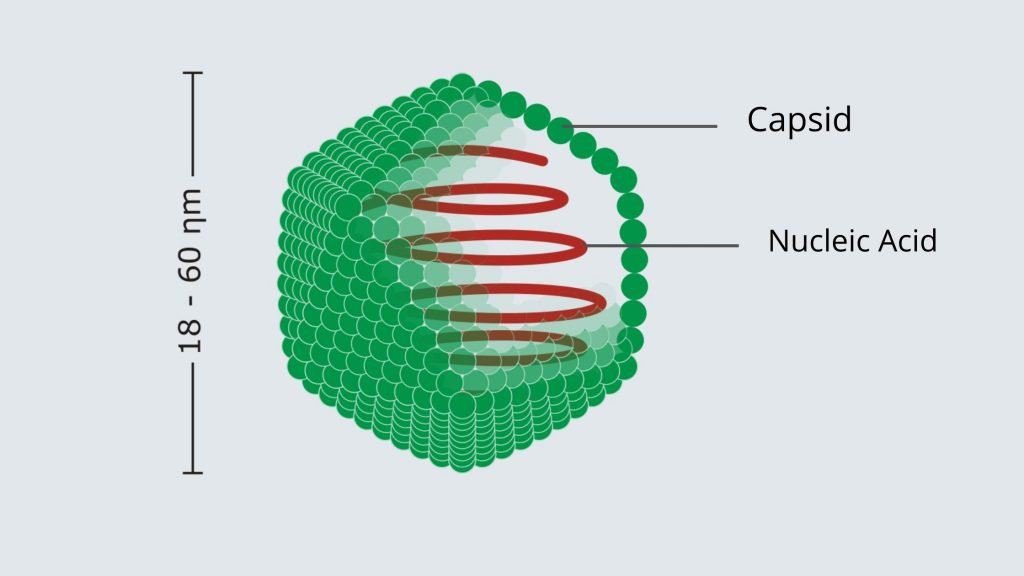 Virus Structure and Application - Icosahedral
