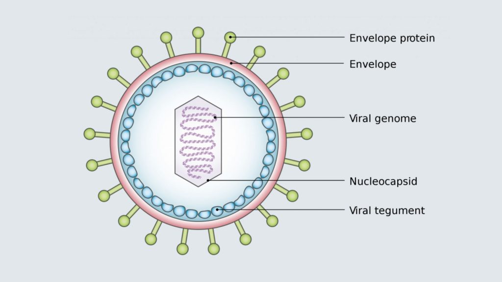 Virus Structure and Application
