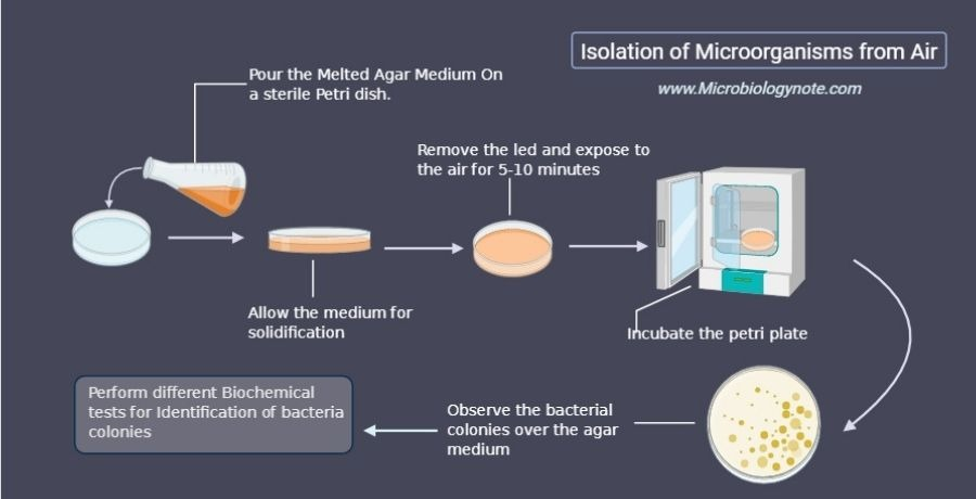 Isolation of Microorganism From Air