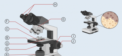 How to Use a Compound Microscope