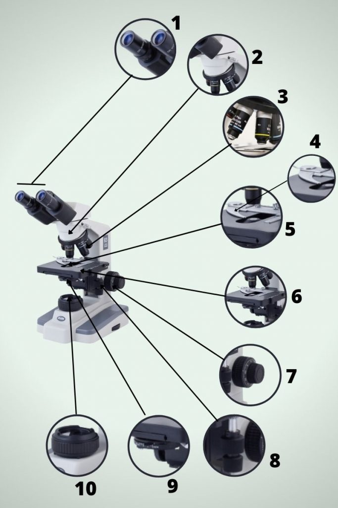 Important Optical Parts of a Microscope and their function