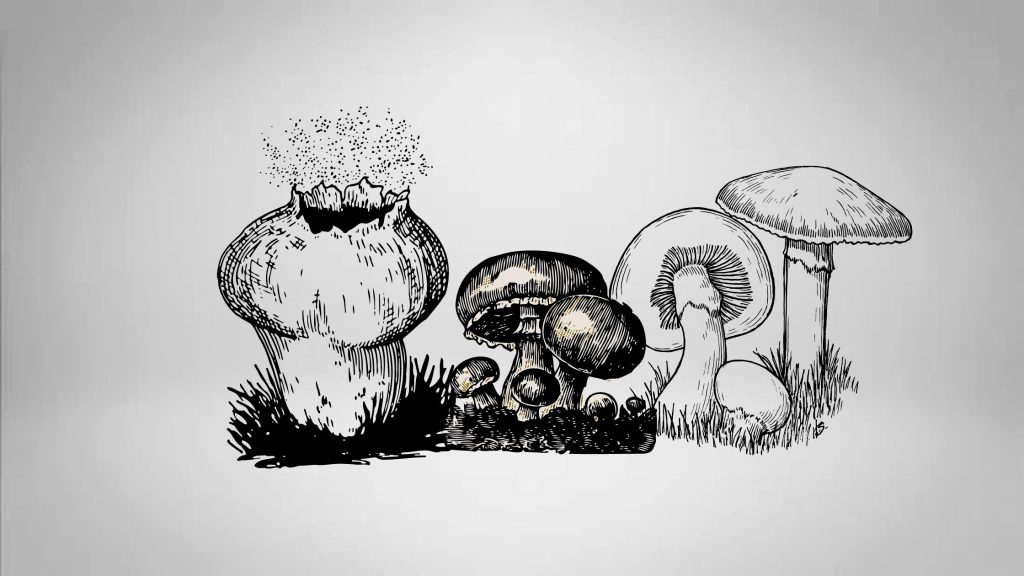Reproduction of Fungi: Sexual, Asexual and Vegetative Reproduction