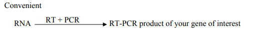 One-Step RT-qPCR