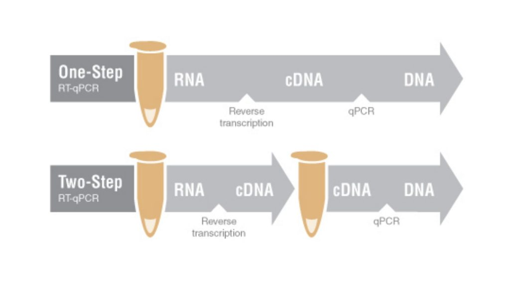 one-step RT-qPCR and two-step RT-qPCR