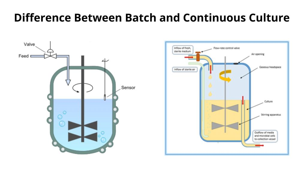 Difference Between Batch and Continuous Culture