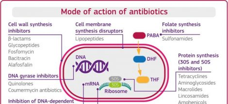 Mode of action of antibiotics and classification.