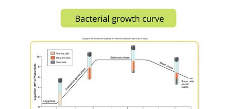 Bacterial growth curve and different Phases