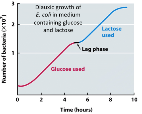 What is Diauxic growth?