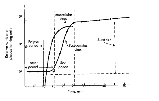 One Step Growth Curve