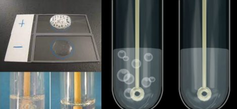 Catalase Test Principle, Procedure, Result and Application.