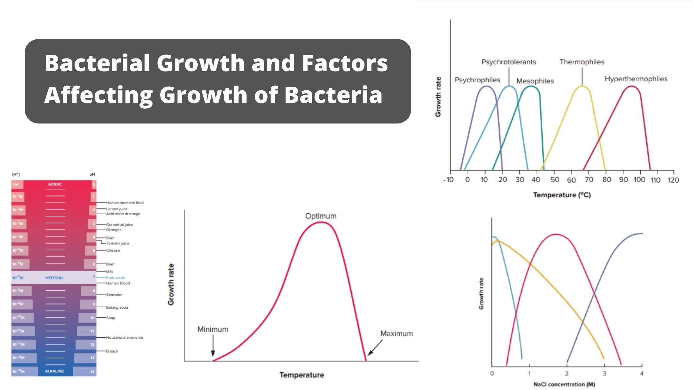 Bacterial Growth and Different Environmental Factors Affect Bacterial Growth