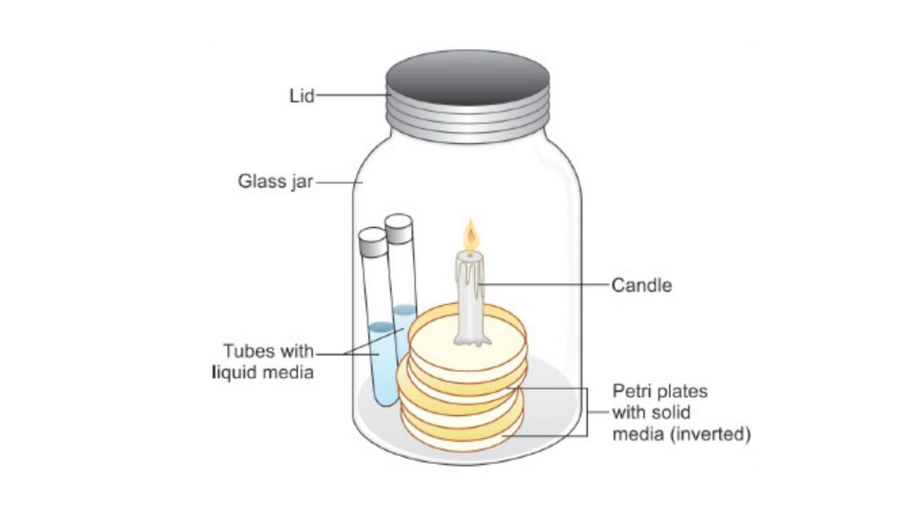 Cultivation of Anaerobic Bacteria using Candle jar