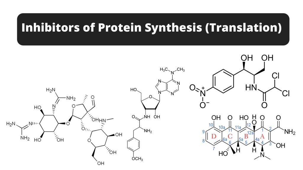 Inhibitors of Protein Synthesis (Translation)