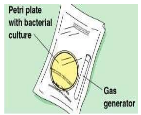 Cultivation of Anaerobic Bacteria using Gas pack